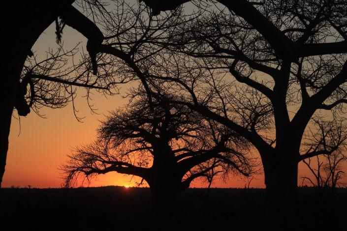 Baobab Forest Gonarezhou National Park Zimbabwe 21-07-2017
